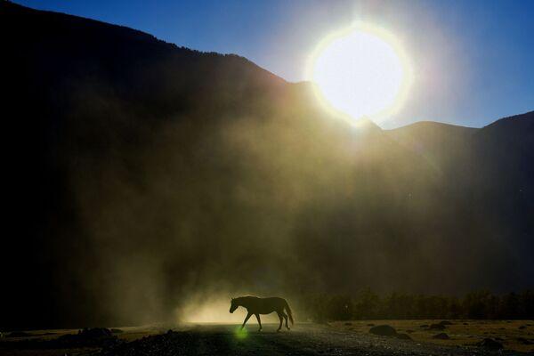 Kůň se pase u dálnice v údolí řeky v Altajské republice - Sputnik Česká republika