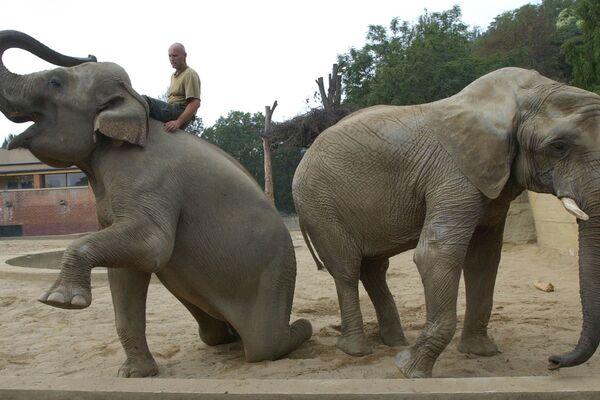 Sloni v Pražské zoo - Sputnik Česká republika