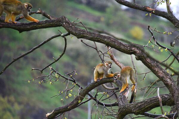 Kotulové veverovití v pavilonu Pražské zoo - Sputnik Česká republika