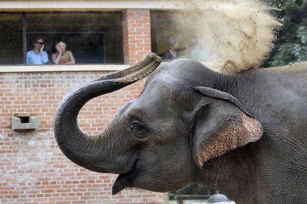 Návštěvníci Pražské zoologické zahrady sledují slona indického - Sputnik Česká republika