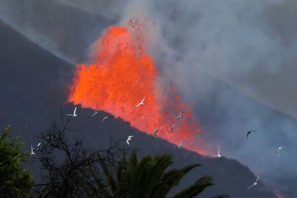 Erupce sopky Cumbre Vjela. - Sputnik Česká republika