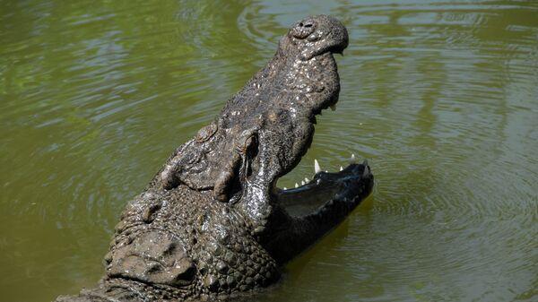 Морда крокодила с открытой пастью - Sputnik Česká republika