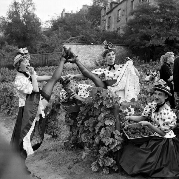 Tanečníci Moulin Rouge se účastní sklizně vinic na Montmartru v Paříži dne 2. října 1953 - Sputnik Česká republika
