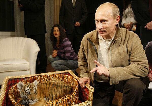 Ruský premiér Vladimir Putin představil novinářům tygří mládě, které dostal k narozeninám 7. října. 2,5 měsíční samice tygra amurského se brzy přesune z rezidence Novo-Ogarevo do zoo - Sputnik Česká republika