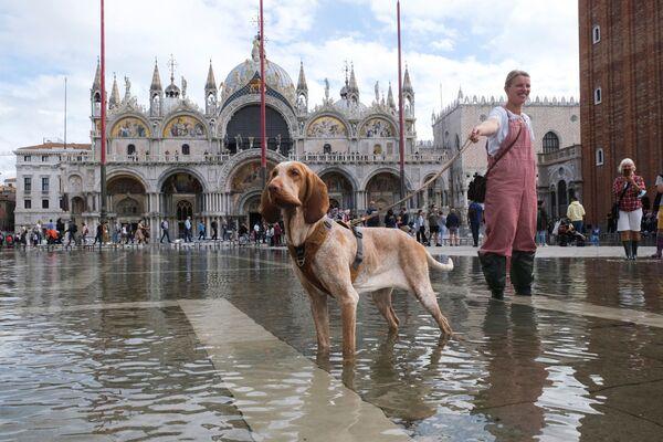 Pes pózuje na zatopeném náměstí svatého Marka v Benátkách v období záplav, 5. října 2021. - Sputnik Česká republika