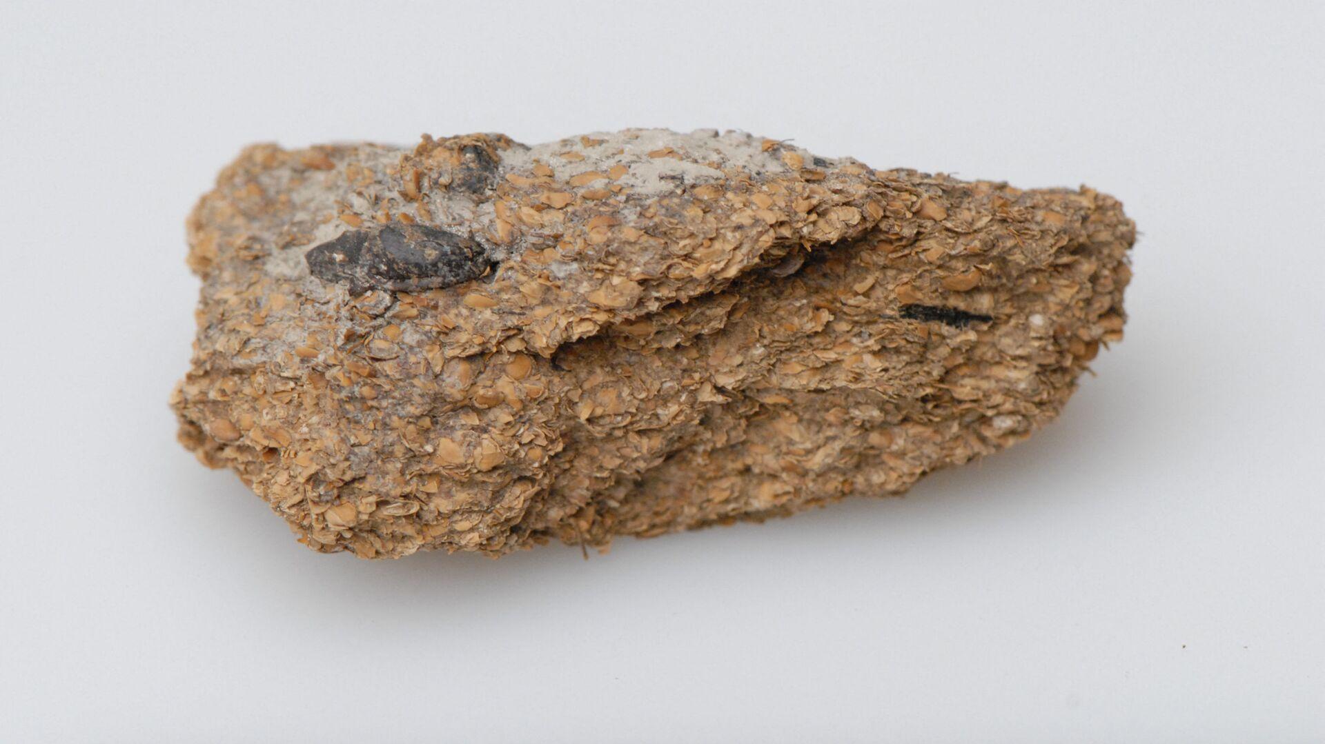Lidské exkrementy staré 2700 let - Sputnik Česká republika, 1920, 14.10.2021