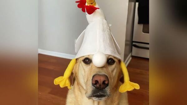 Собака держит на носу яйцо - Sputnik Česká republika