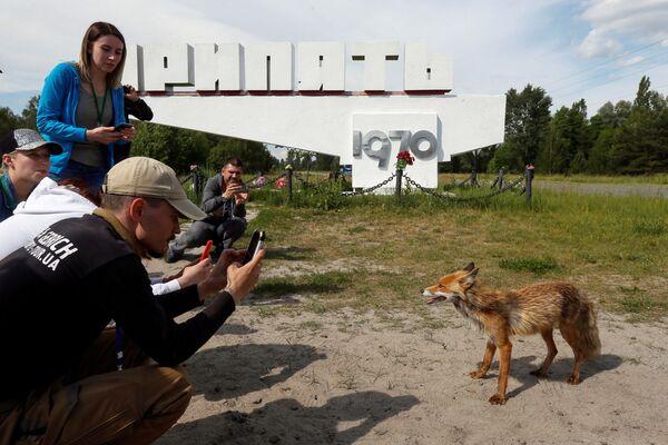 Turisté si fotí lišku ve městě Pripjať. - Sputnik Česká republika