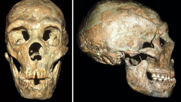 Lebka neandertálce - Sputnik Česká republika