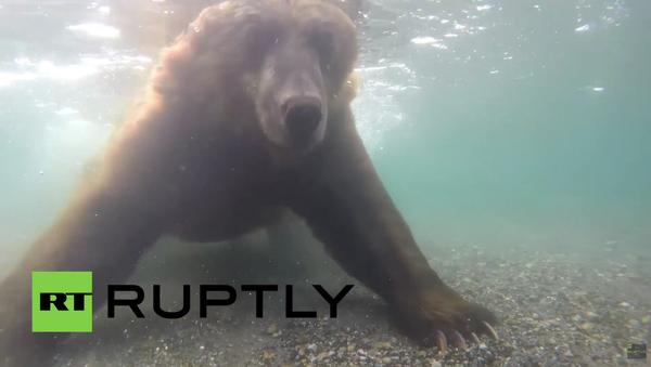 Unikátní záběry: Medvědi loví ryby na Kamčatce - Sputnik Česká republika