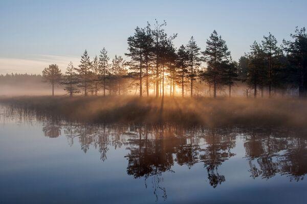 Severní země divů: Karelské lesy - Sputnik Česká republika