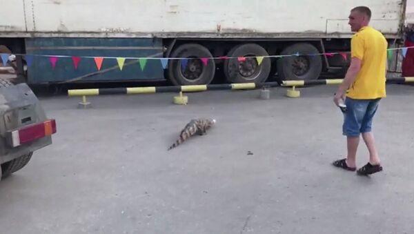 Na Sibiři na parkovišti našli krokodýla. Utekl z cirkusu - Sputnik Česká republika