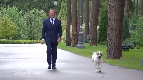 Video: Ruský premiér Medveděv ukázal své štěně, které si volně běhá po sálech a místnostech jeho předměstské rezidence - Sputnik Česká republika