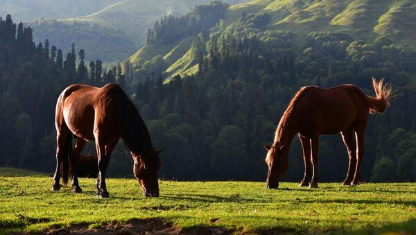 Koně v Ritzinském národním parku - Sputnik Česká republika