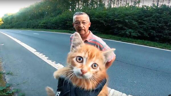 Motorkář a řidič automobilu na dálnici v Belgii zachránili kotě. Video se stalo virálním - Sputnik Česká republika
