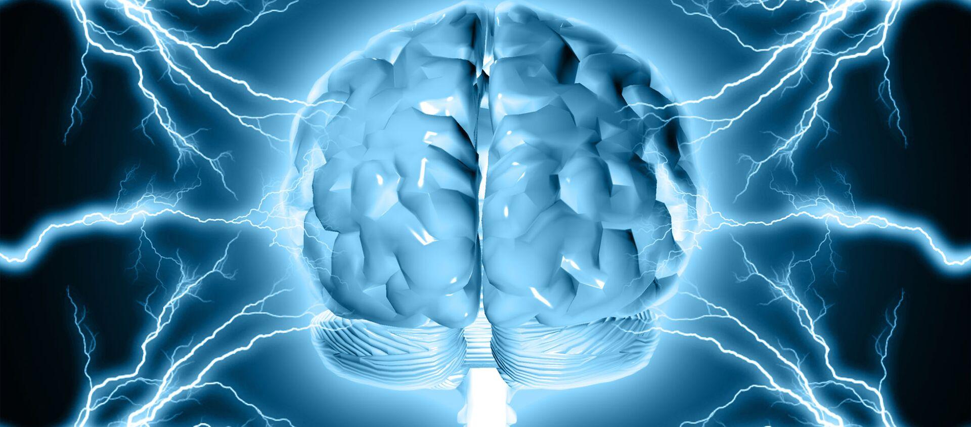 model lidského mozku - Sputnik Česká republika, 1920, 08.04.2021