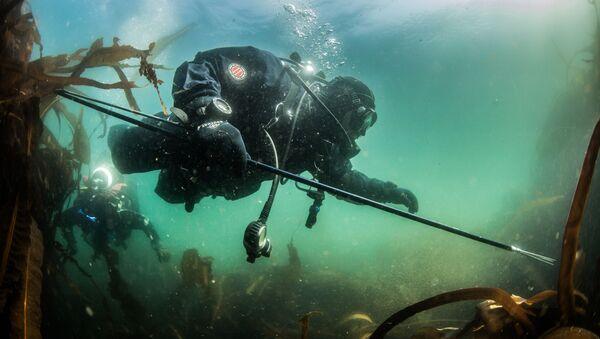 Potápěč zkoumá dno Novokurilského zálivu v Ochotsku u ostrova Urup (ostrov jižní skupiny Velkého pohoří Kurilské ostrovy) - Sputnik Česká republika