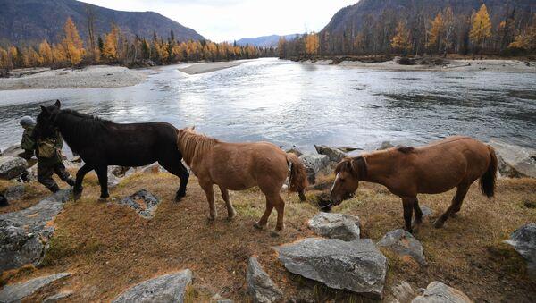 Místní obyvatel vede koně na pastvinu poblíž vesnice Alygdžer v Irkutské oblasti - Sputnik Česká republika