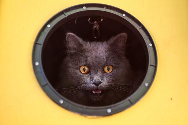 Kočka v kulatém okně - Sputnik Česká republika