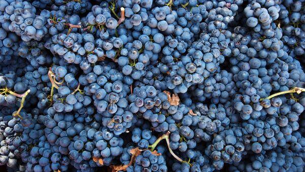 Hroznové vínо - Sputnik Česká republika