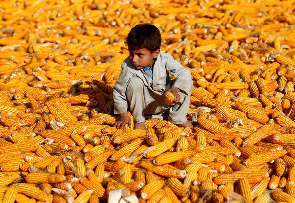 Chlapec na kukuřičném poli v Afghánistánu. - Sputnik Česká republika