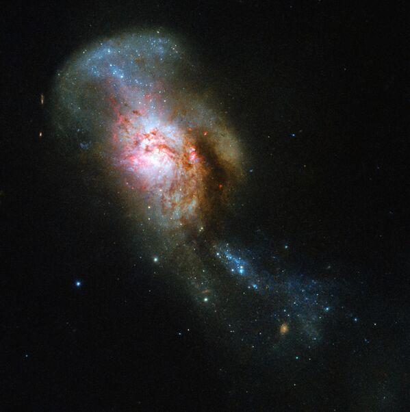 Teleskop Hubble vyfotil těleso NGC 4194 Splynutí medúzy. - Sputnik Česká republika