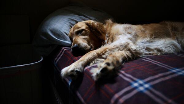 Pes spící  na posteli - Sputnik Česká republika