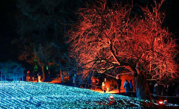 Od Thajska do Kalifornie. Jak se ve světě připravují na vánoční kouzlo - Sputnik Česká republika