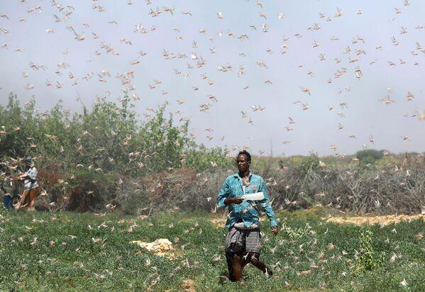 Farmář v Somálsku během invaze sarančat u města Dhuusamareeb - Sputnik Česká republika