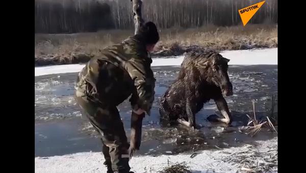 Los spadl do ledové vody a marně se snažil zachránit. Všechno mohlo skončit špatně - Sputnik Česká republika