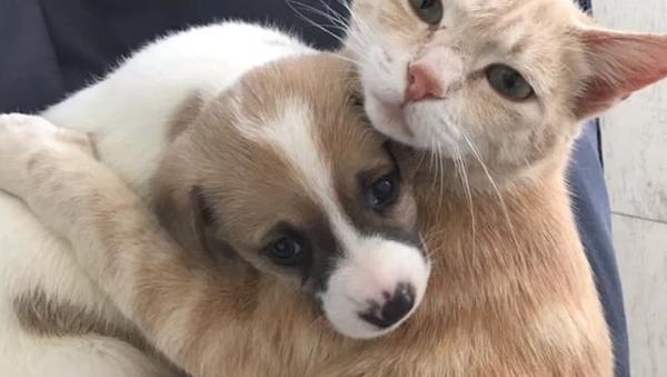 Nahradila mláďatům matku. Tato kočka kojila čtyři štěňata - Sputnik Česká republika
