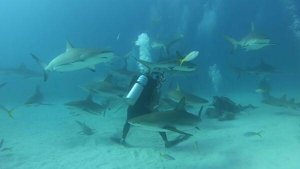 Desítky hladových žraloků obklíčily potápěče na Bahamách - Sputnik Česká republika