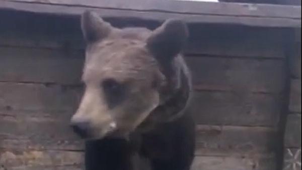 To je šok! Žena krmí obrovského medvěda přímo ze své pusy  - Sputnik Česká republika