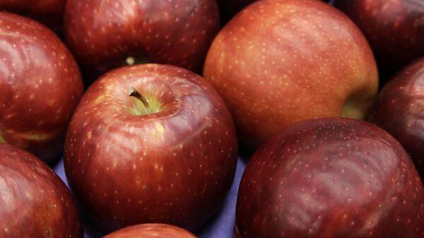 Яблоки сорта Космик Крисп  - Sputnik Česká republika