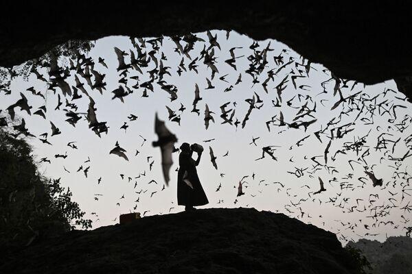 Žena plaší netopýry, Myanmar - Sputnik Česká republika