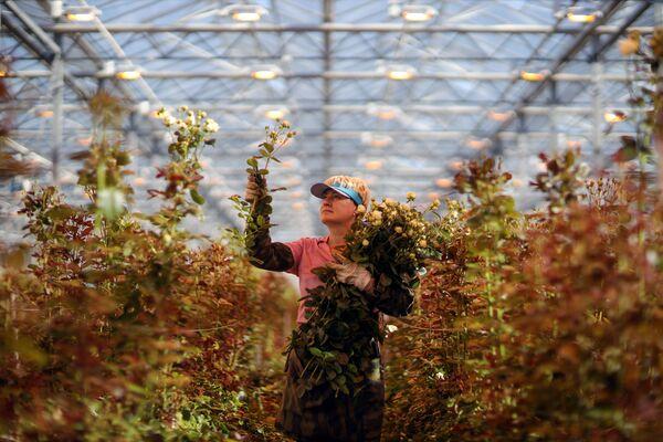 Zahradní skleník v Adygejské republice na jihu Ruska - Sputnik Česká republika