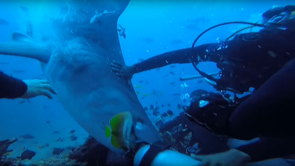Na internetu se objevilo video, jak žralok kousl do hlavy potápěče - Sputnik Česká republika