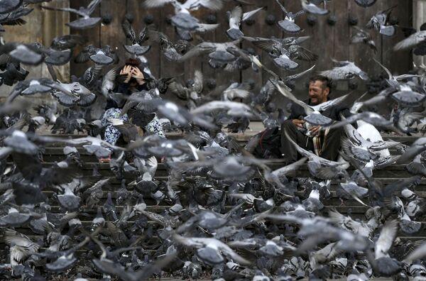 Hejno holubů na ulici v Bogotě - Sputnik Česká republika