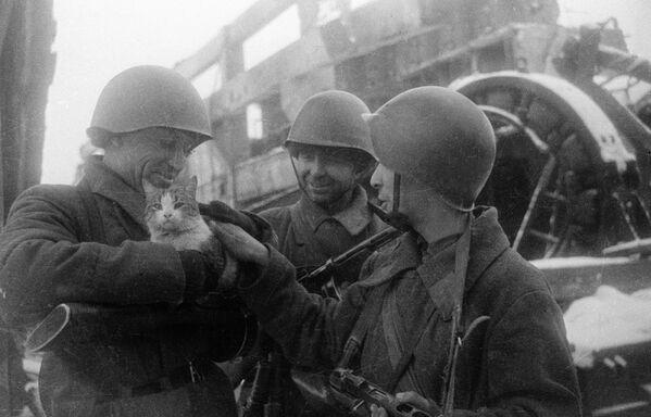 Fotografie Mírové vzpomínky. Stalingrad, 1943. - Sputnik Česká republika