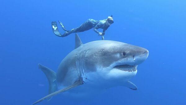 Potápěčka Ocean Ramsayová plovoucí s velkým žralokem bílým - Sputnik Česká republika
