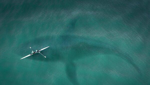 Silueta žraloka ve vodě. Ilustrační obrázek - Sputnik Česká republika
