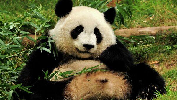 Panda - Sputnik Česká republika
