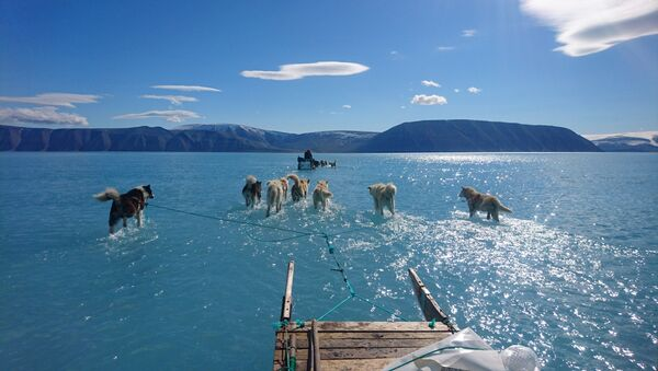 Ездовые собаки тянут сани по покрытому водой льду Гренландии - Sputnik Česká republika