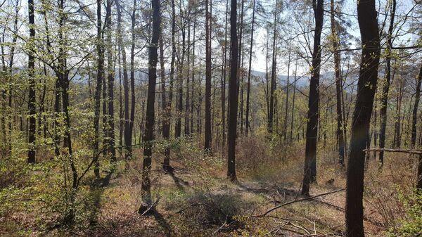 Obr.3 Zatím ještě zdravý les. - Sputnik Česká republika