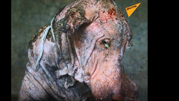 Pohublý nemocný pes umíral u silnice a už vypadal jako kámen   - Sputnik Česká republika