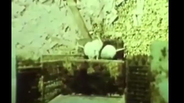 Nejznámější a nejstrašnější experiment Vesmír-25. Jak se myší ráj stal peklem - Sputnik Česká republika