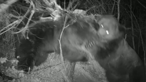 Na záběry se dostala děsivá rvačka dvou medvědů - Sputnik Česká republika