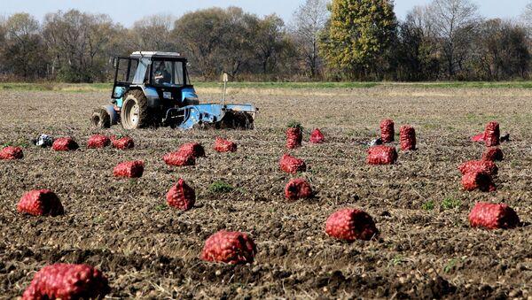 Sklízení brambor - Sputnik Česká republika