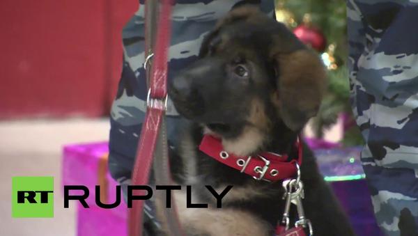Policejní štěně Dobryňa si zahrálo s vodítkem během ceremonie na francouzském velvyslanectví - Sputnik Česká republika
