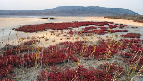 Tam, kde na jaře byla voda, vzniká na podzim slaná poušť, přes kterou se dá dostat k vodě - Sputnik Česká republika